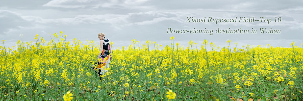 Xiaosi Rapeseed Field--Top 10 flower-viewing destination in Wuhan